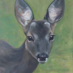 Deer study 3 2013 Oil on board 38x30cm