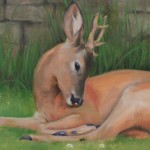 Deer study 4 2013 Oil on board 25x60cm