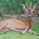 Deer study 5 2013 Oil on board 19x29cm