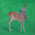 Deer study 8 2013 Oil on board 30x30cm